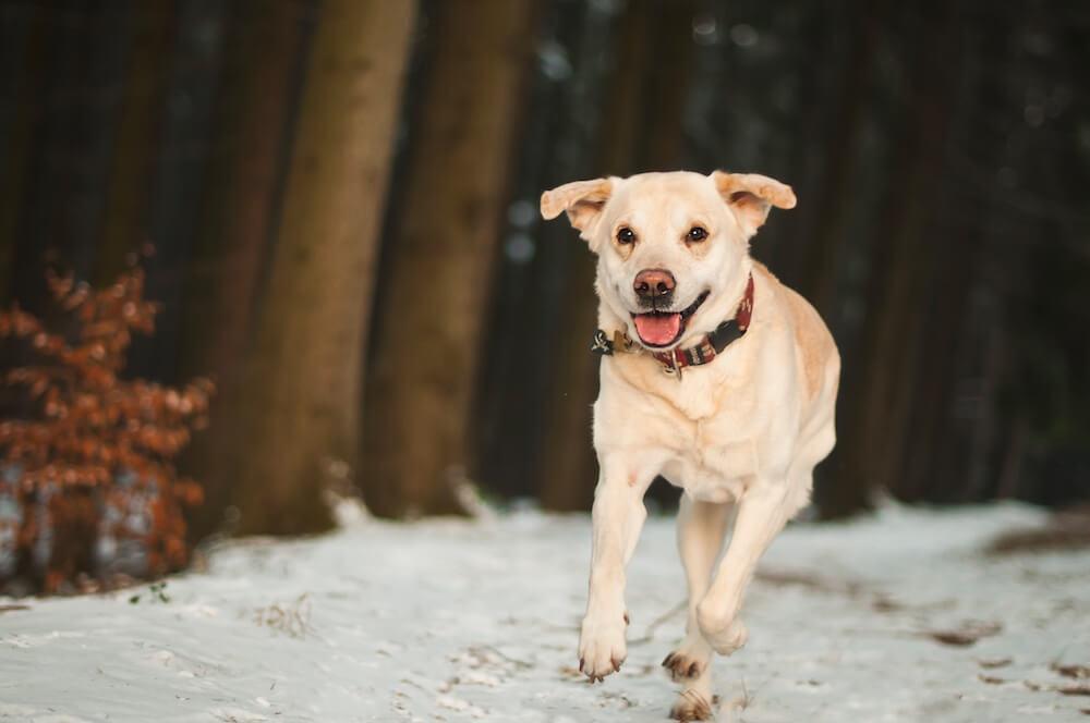 outdoor-dog-run-1363660-pxhere.com