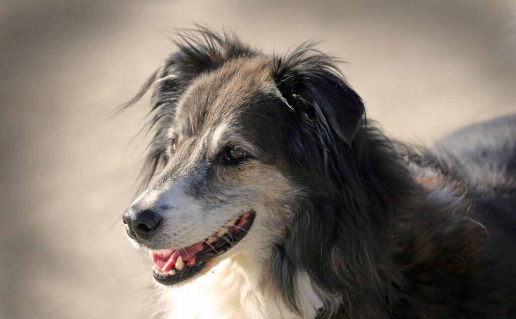outdoor-dog-run-895718-pxhere.com
